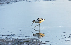 Avocet photographed at L\'Eree Aerodrome on 9/1/2010. Photo: © Stuart Dunn